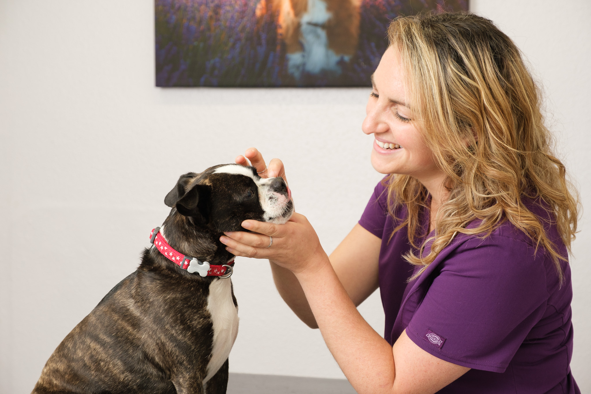 Business photography independent veterinary practice with nurse checking the eye of a small dog