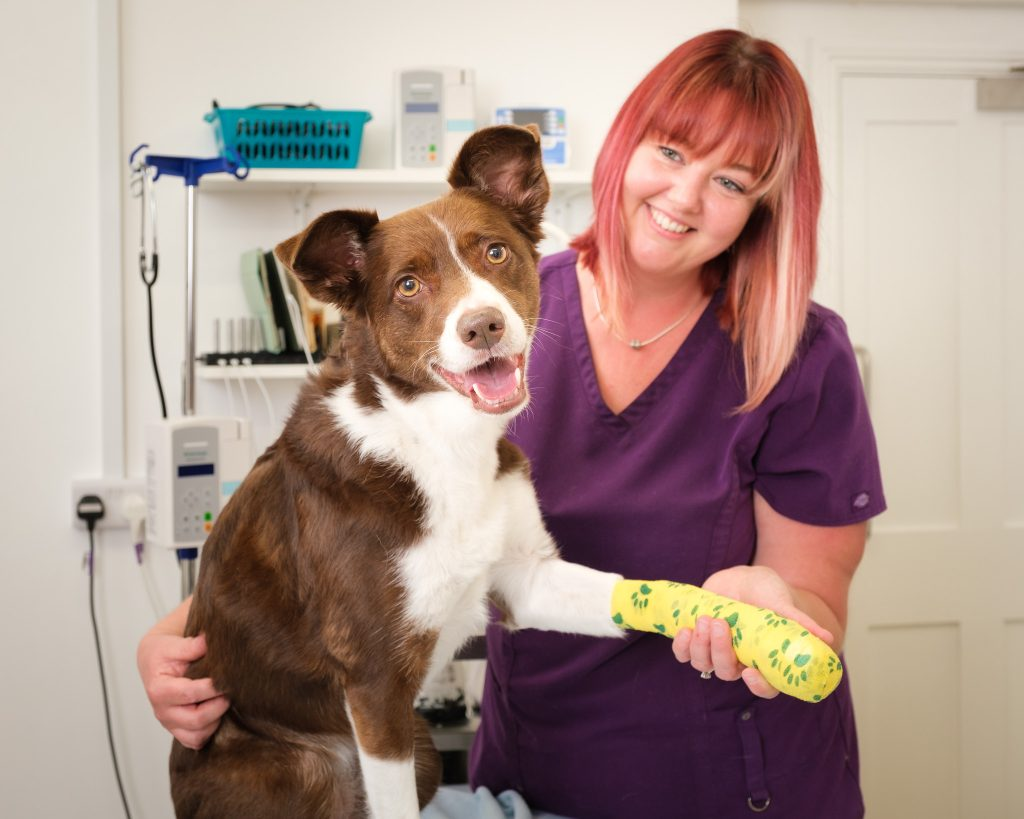 Business photography independent veterinary practice with nurse bandaging a collie's front leg